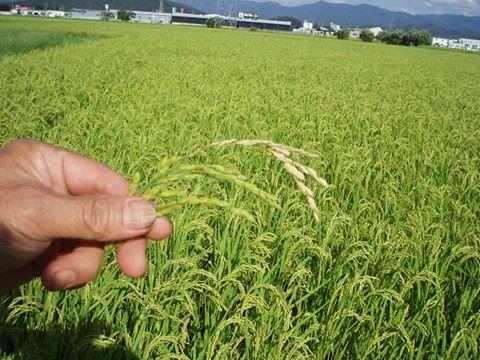 お米を知ろう35