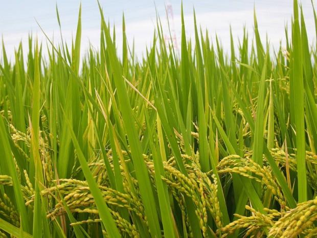 お米を知ろう65