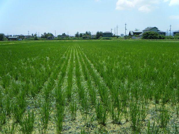 お米を知ろう102